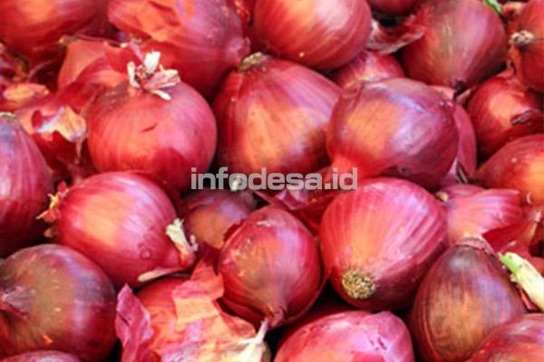 Petani Bawang Merah Keluhkan Rencana Impor